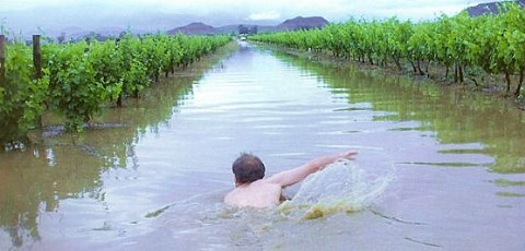 Flooding of vineyards in the Robertson area, November 2008